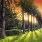 Arboretum Trsteno_aleja palmi
